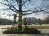 аранжиране на дървета в цяла София